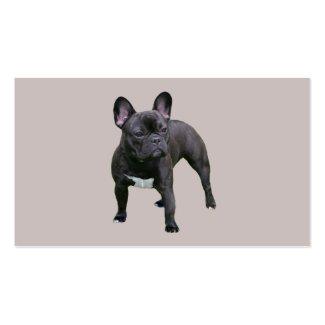 Französische Bulldogge Visitekarte